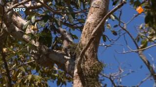 Freeks Wilde Wereld - Verstoppertje In De Pantanal