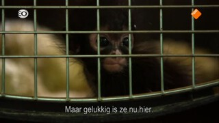 Dierenhospitaal In De Jungle - Natuur Op 2: Dierenhospitaal In De Jungle