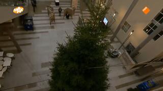 Kerstboom in de Tweede Kamer