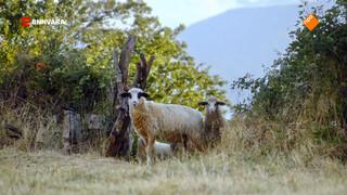 Geraldine bezoekt een mega afgelegen bergdorp in Albanië