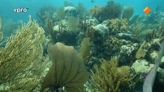 Freeks wilde wereld Belize - Koraal