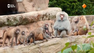 The zoo Dit zijn de mensen