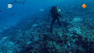 Blue Planet II: The making of