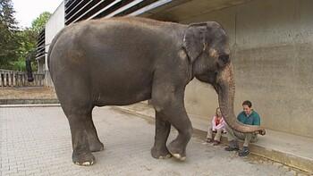 De slurf van de olifant