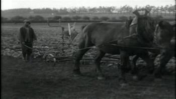 De boerderij