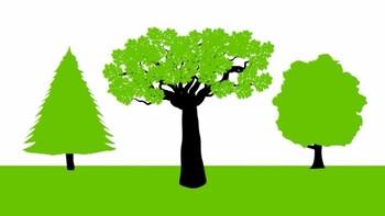 Hoe werkt een ecosysteem?