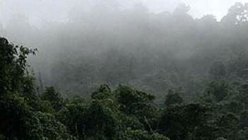 Herbebossing in Vietnam