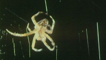 Een wevende spin
