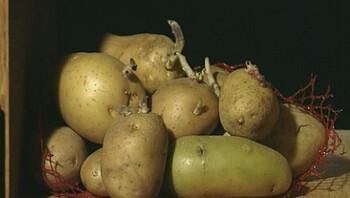 Hoe groeit een aardappel?