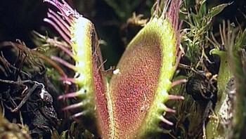 Planten die insecten eten