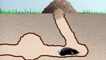 Graven en jagen van een mol