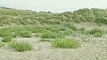 Ontstaan van duinen