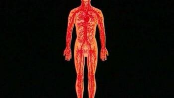 Bloedsomloop