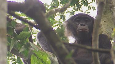 Het Klokhuis: Bonobo