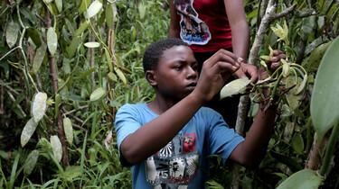Jean (14) plukt vanille op Madagascar