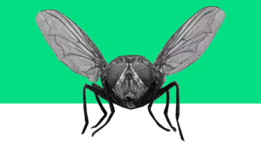 Waarom zijn insecten nuttig?