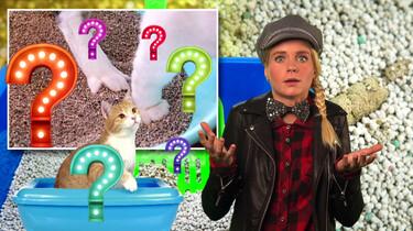 Waarom begraven katten hun poep?: Een schoon territorium voor Poekie