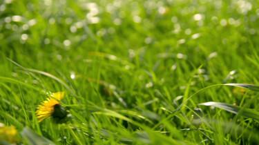 Waarom ruikt pas gemaaid gras zo lekker?: Clipje uit Studio Snugger