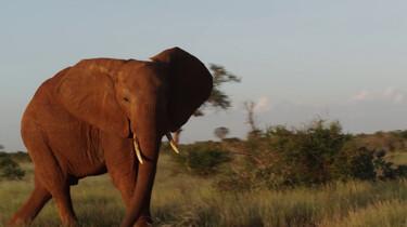 Hoe verjaag je olifanten?: Clipje uit Studio Snugger
