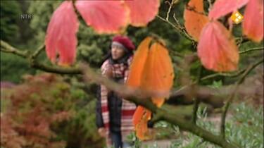 Nieuws uit de natuur: Bladeren