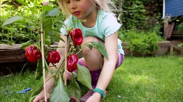 Frida plant een paprikaplant