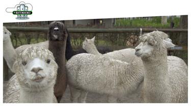 De Buitendienst: Wilde dieren: schattig of levensgevaarlijk?