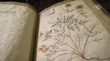 Vroege Vogels in de klas : Het herbarium