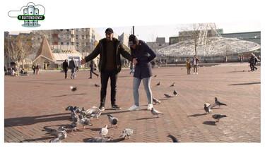 De Buitendienst: De brutale duif en andere dieren in de stad
