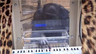 Hebben dieren muziekgevoel?: Dansende kaketoes en een headbangende zeeleeuw