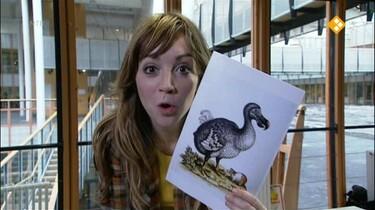 Het Klokhuis: Dodo