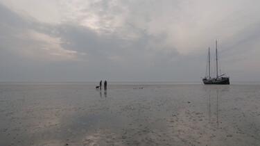 Verdwijnt de Waddenzee door klimaatverandering?: Dieren hebben het Wad nodig