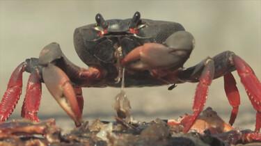 Het Klokhuis: Krabben