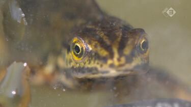Vroege Vogels in de klas : Salamanders