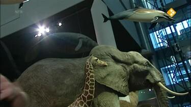 Het Klokhuis: Prehistorische dieren