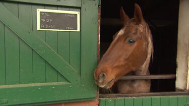 Wat is een paardenrusthuis?: Rustplek voor bejaarde paarden
