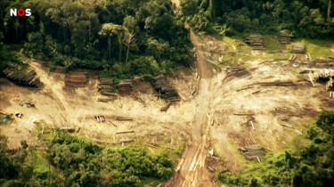 Waarom is de ontbossing in de Amazone een probleem?