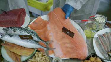 Broodje Gezond in de klas : Hoe gezond is vis?