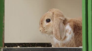 Hoe fok je konijnen?: Schattige dieren zijn niet altijd gezond