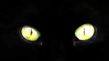 Waarom geven de ogen van nachtdieren licht in het donker?: Een reflecterend laagje achter het netvlies