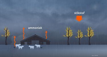 EenVandaag in de klas : De gevolgen van mestdampen voor de natuur