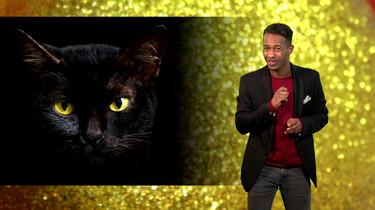 Waarom zeggen ze dat zwarte katten ongeluk brengen?: Een eeuwenoud bijgeloof