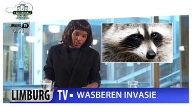 De Buitendienst: Weg met de wasbeer?!