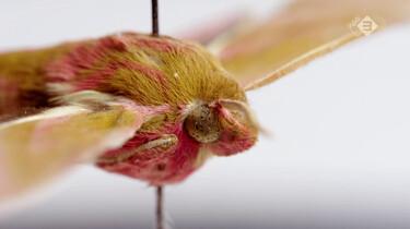 De Kennis van Nu in de klas : Landbouw en insecten