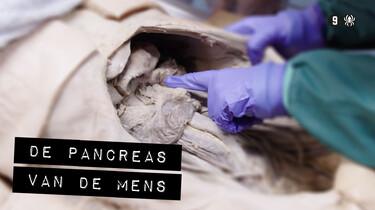 De Binnendienst: De pancreas van een mens