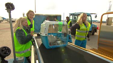 Waar blijven dieren tijdens een overstap op een vliegveld?