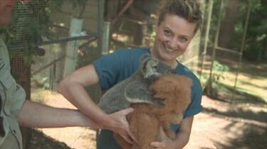 Het Klokhuis: Koala