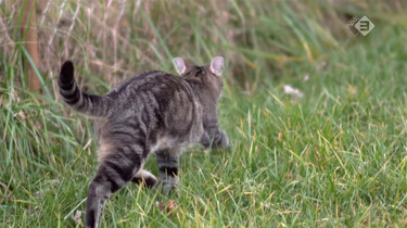 Waar hangt je kat uit als hij buiten is?