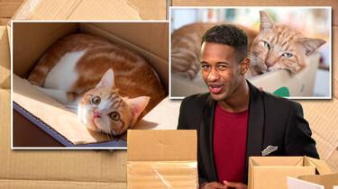 Waarom zitten katten zo graag in kartonnen dozen?: Een veilige plek voor de gestreste kat