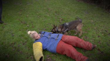 Hoe train je een politiehond?: Politiehond Bumper moet kunnen dreigen, bijten en speuren