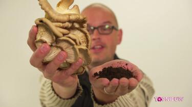 Hoe kweek je oesterzwammen op koffiedik?: Een duurzame manier om paddenstoelen te kweken